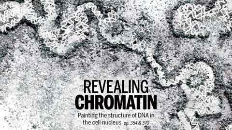 2m 길이 DNA가 4㎛ 세포핵에 쏙 들어가는 비밀은