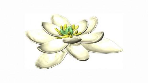 지구상 최초의 꽃은 어떤 모습이었을까