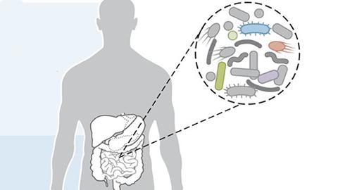 [강석기의 과학카페] 장내미생물을 활용해 건강하게 살 방법은?