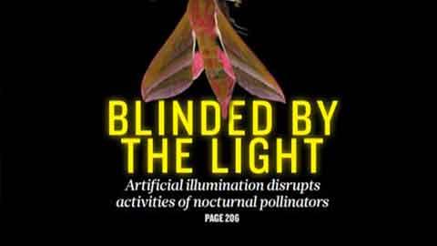빛 공해가 식물 번식도 방해한다