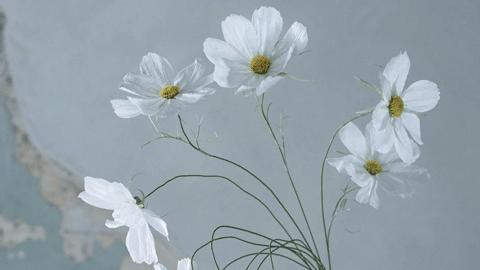 분명 꽃인데, 꽃이 아니다!?