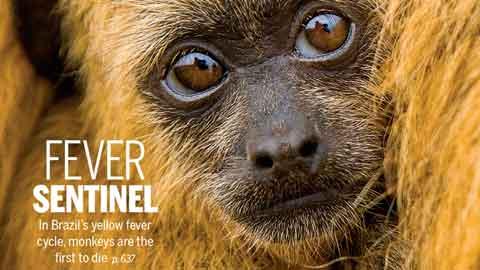 브라질의 숲에서 펼쳐진 '혹성탈출-종의 전쟁'