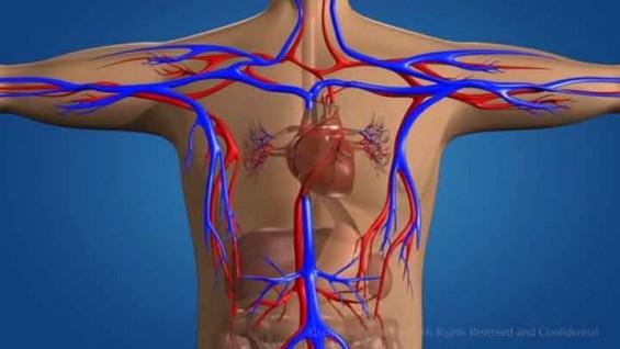 몸 속 혈관도 3D 프린터로 찍어낸다