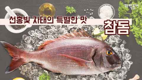 [카드뉴스] 선홍빛 자태의 특별한 맛 참돔