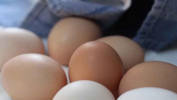 친환경 달걀 농장에서 나온 DDT... 38년 금지 농약 어떻게 검출됐을까