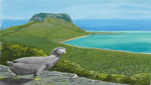 멸종동물의 상징, 도도새의 성장 비밀 풀렸다