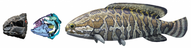 2억 5000만 년 전 물고기는 이렇게 생겼다 - ddd 제공