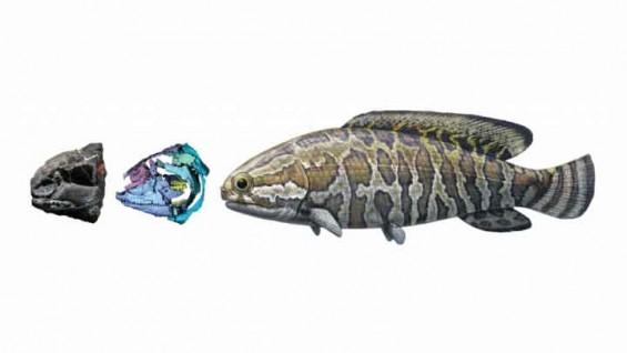 2억 5000만 년 전 물고기는 이렇게 생겼다