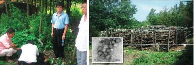 2006년부터 중국 곳곳에서 발생한 진드기 매개 질병의 실체가 미궁에 빠지자 2009년 중국 보건당국은 전문가인 슈에지 유 미국 텍사스의대 교수를 초빙했다. 유 교수(물병을 들고 서 있는 사람)가 현지 농민들이 개의 몸에서 진드기를 찾는 모습을 지켜보고 있다. 오른쪽 사진은 환자가 발생한 농장 정경으로 박스에 바이러스의 전자현미경 이미지가 보인다. - 텍사스의대 제공