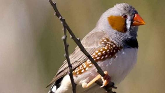 외국어 마스터의 비결, 새는 알고 있다?
