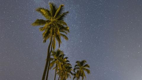 '2017년 야경 사진' 나무들과 밤하늘