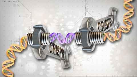 난임 문제 해결할까...배아 생명 유지에 필수적인 유전자 확인