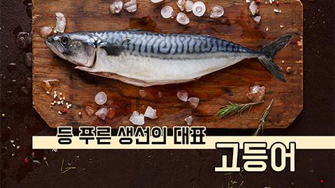 [카드뉴스] 등 푸른 생선의 대표 고등어