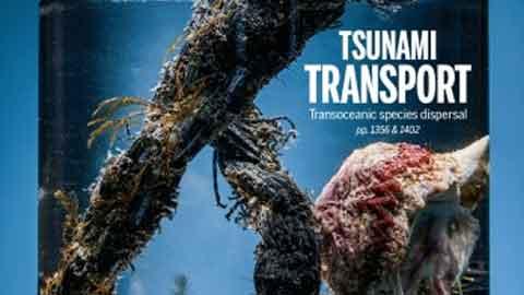 일본산 굴이 하와이에서 발견된 까닭은?