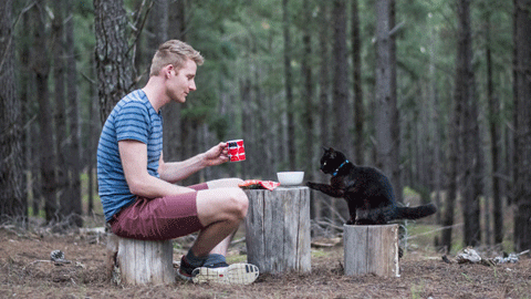 전 재산을 팔아, 고양이와 여행 떠난 남자