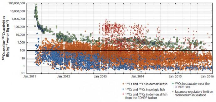 후쿠시마 인근 일곱 개 현과 후쿠시마 원전 항구에서 채취한 어류와 바닷물에서 측정한 세슘134와 세슘137의 방사능 데이터다. 중간의 굵은 가로선은 일본정부가 정한 허용치로 kg당 100베크렐이다. 사고가 나고 4년이 지난 시점에서 부어류(pelagic fish. 파란 동그라미)의 수치는 모두 허용치 아래이고 저서어류(갈색 동그라미)도 대부분 아래다. 반면 원전 항구에 사는 저서어류(갈색 x)는 꽤 높은 수치를 보이는 경우가 여전히 있다. - 해양과학연간리뷰 제공