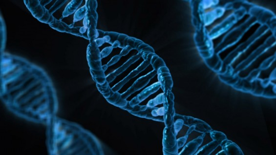 DNA 돌연변이 발생막는 '가이드 단백질' 찾았다.