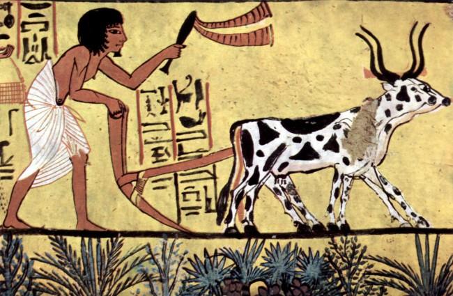 농업의 시작은 과연 언제였을까?