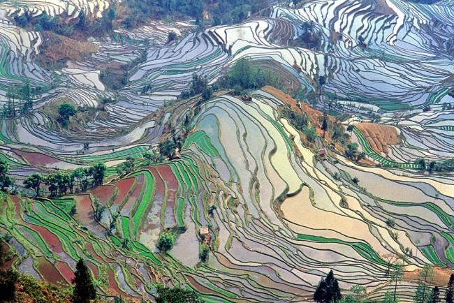 중국 윈난성의 계단식 논. 한 번 시작된 농업은 인류 문명을 바꿨을 뿐만 아니라, 관여한 동식물의 유전자도 바꿨다. - Jialiang Gao-www.peace-on-earth.org 제공