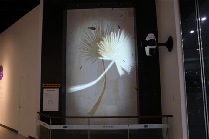 미디어파사드를 응용한 종려나뭇잎 화석 전시물 - 국립과천과학관 제공