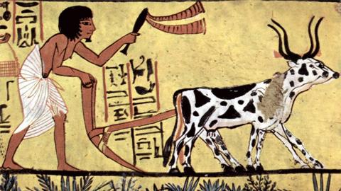 [뉴스 되짚어보기] '농작물' 진화 시작은 3만 년 전?
