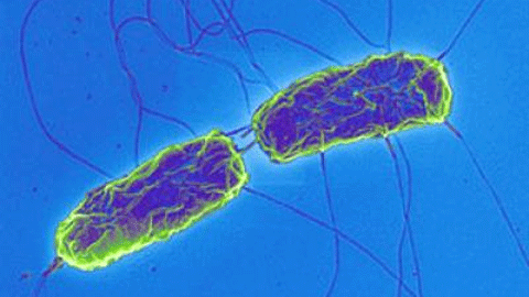 박테리아와 자석 입자로 나노 변신 로봇 개발... 고성능 약물 전달체 활용 기대