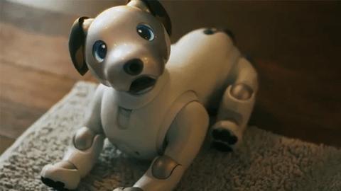[이철민의 돈테크무비] 소니의 화려한 부활은 애완로봇 아이보로 완성될 수 있을까?