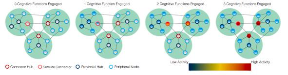 최근 네크워크 모형인 그래프 이론으로 뇌를 분석하는 연구가 활발하다. 이에 따르면 뇌는 기능단위인 노드로 구성된 몇 개의 모듈로 볼 수 있다. 처리하는 인지 과제에 따라 노드 사이의 네트워크의 활동 패턴이 바뀐다. - 미국립과학원회보 제공