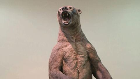 """""""역사상 가장 큰 곰"""" 깜짝"""