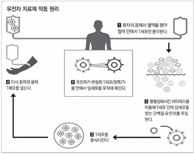 유전자 치료 원리 - 노바티스 제공