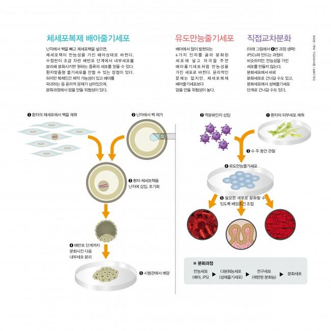 체세포복제 줄기세포 vs. 역분화/직접교차분화줄기세포 - (주)동아사이언스 제공