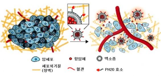암세포 보호막 뚫는 항암 나노물질 개발