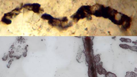 35억년 전 생명 탄생 증거 나왔다!