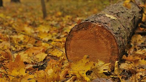 [짬짜면 과학 교실] 숲이 우선일까? 나무가 우선일까?