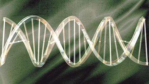 인공 DNA로 단백질 만들다