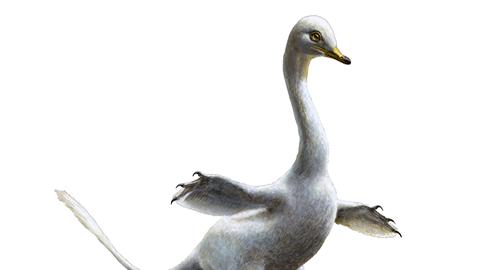 백조 닮은 육식 공룡 있었다