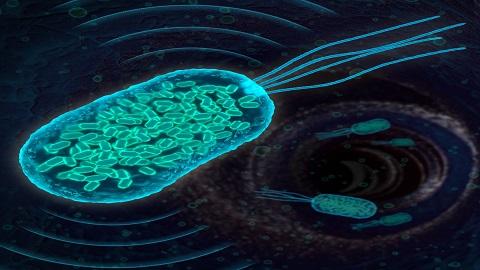 미생물 메아리로 질병의 정확한 위치 찾아낸다