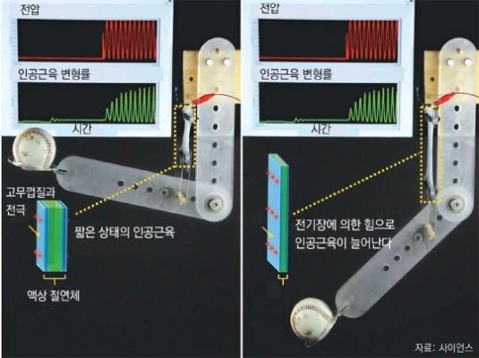 사람 근육처럼 부드럽게 움직이는 소프트 인공근육, 인간형 로봇 길 연다