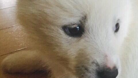 [그것을 알려줄개 ③] 본능과 이성 사이, 개는 억울하다