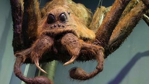 해리포터 속 괴물 거미가 나타났다?