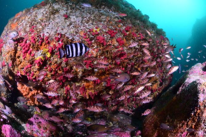 [금상-국제부] 산호초 사이를 헤엄치고 있는 물고기의 모습 - Kim, ki joon, 대한수중핀수영협회 제공