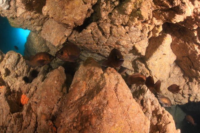 [금상-국내부] 광각사진의 묘미를 살려 바닷속 물고기들의 모습을 담아냈다. - 이기상, 대한수중핀수영협회 제공