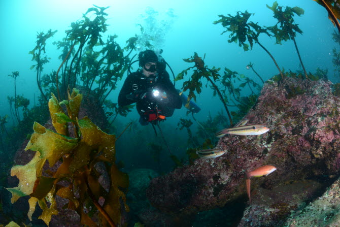 [금상-국제부] 산호초 사이를 헤엄치는 다이버의 모습 - Jason isley paul, 대한수중핀수영협회 제공