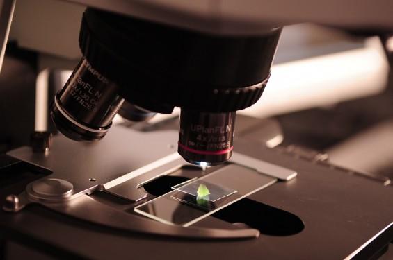 생체 조직 3차원으로 빠르게 관찰하는 현미경 국내 기술로 개발