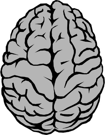 baik (2017). 대뇌 비틀림 (yakovlevian torque. 오른쪽 전두엽과 왼쪽 후두엽이 반대편에 비해서 더 발달되면서 비틀려 있다. 이러한 대뇌 비틀림 현상은 인간에게만 관찰되는 독특한 현상이다. - pixabay 제공