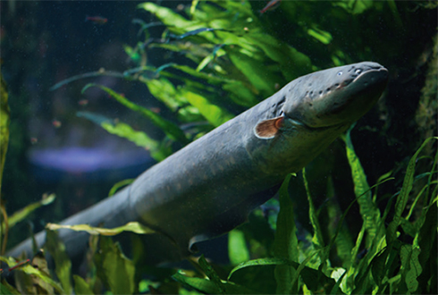 전기뱀장어 모방한 고전압 에너지 발생기