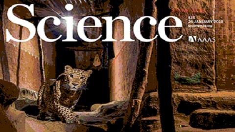 [표지로 읽는 과학] 거리에서 터전을 잃고 헤메는 표범을 본다면?