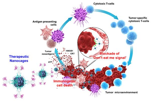 항암 나노입자(FHSIRPα-dox)의 항암 치료 모식도. - 한국과학기술연구원 제공