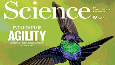 [표지로 읽는 과학] 북한군과 닮은 벌새 기동성, 어떻게 진화했나?