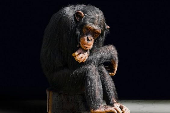 [내 마음은 왜 이럴까?] 진화심리학 삼국지